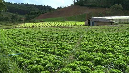 Lavouras de hortaliças de Vargem Alta produzem menos que o previsto por excesso de chuva no ES