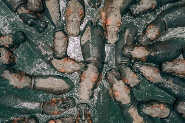 """A imagem vencedora, intitulada """"Hungry Hippos"""" (hipopótamos famintos, em tradução livre), mostra um grupo de hipopótamos tomando um banho de lama, na Tânzania (Foto: Martin Sanchez/ International Drone Photography Contest / Divulgação)"""