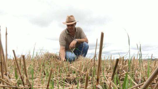 Primavera chuvosa atrapalha trabalhos nos campos paranaenses