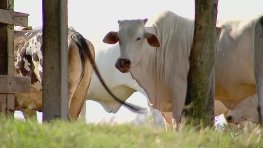 Casos de raiva bovina chegam a 12 na região de Itapetininga