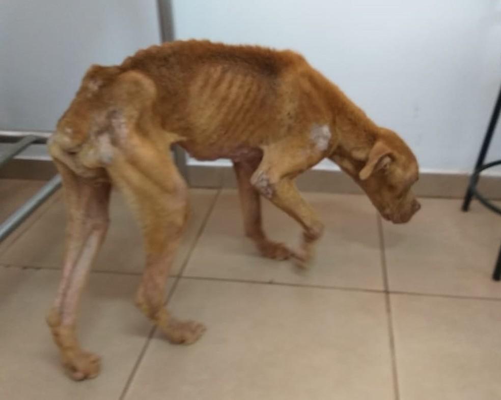 Homem é preso por manter cachorra em situação de maus-tratos em Jaú — Foto: Polícia Civil/Divulgação