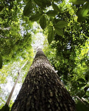 Produzir em harmonia com a floresta