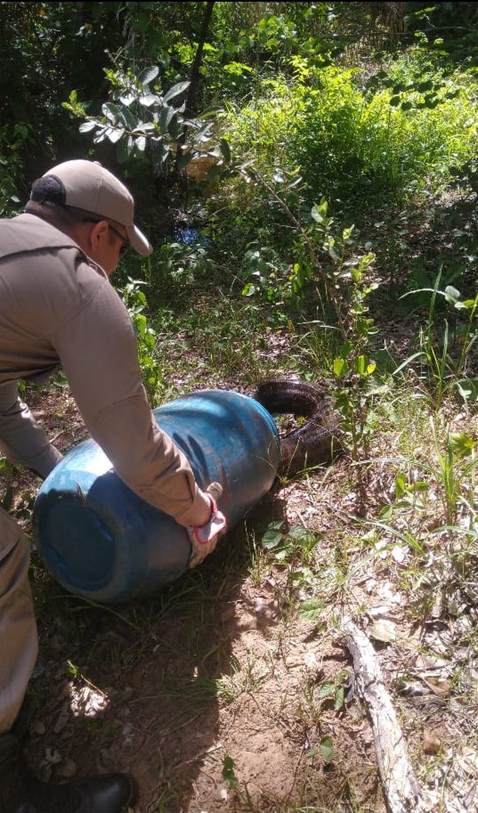Sucuri matou cachorro, foi capturada e solta pelos bombeiros — Foto: Corpo de Bombeiros de Mato Grosso
