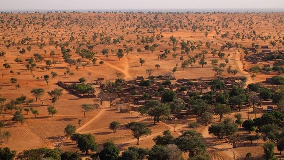 O Saara e o Sahel têm muito mais árvores do que se pensava — Foto: Martin Brandt/BBC