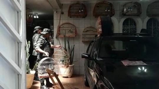 Foto: (Divulgação/Polícia Ambiental)