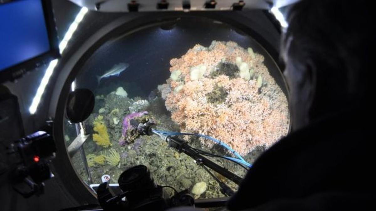 Poluição do ar acidifica oceanos e ameaça vida marinha, diz estudo