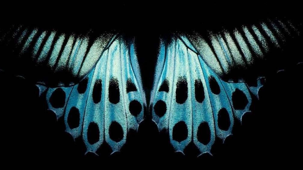Padrão nas asas da borboleta conhecida como 'Blue Mormon', encontrada no sul da Índia e em Sri Lanka (Foto: PRATIK PRADHAN/Royal Photographic Society)