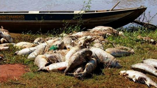 Uma tonelada de peixes mortos é retirada do Rio Claro, em Caçu