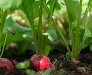 33 hortaliças para plantar no mês de abril