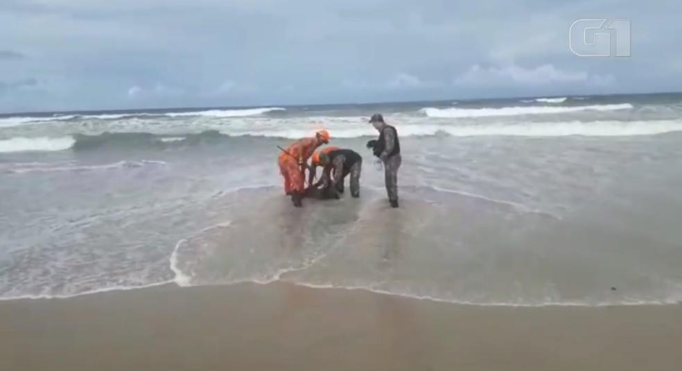 Bombeiros e Polícia Militar Ambiental resgatam capivara em praia de Fortaleza — Foto: Reprodução