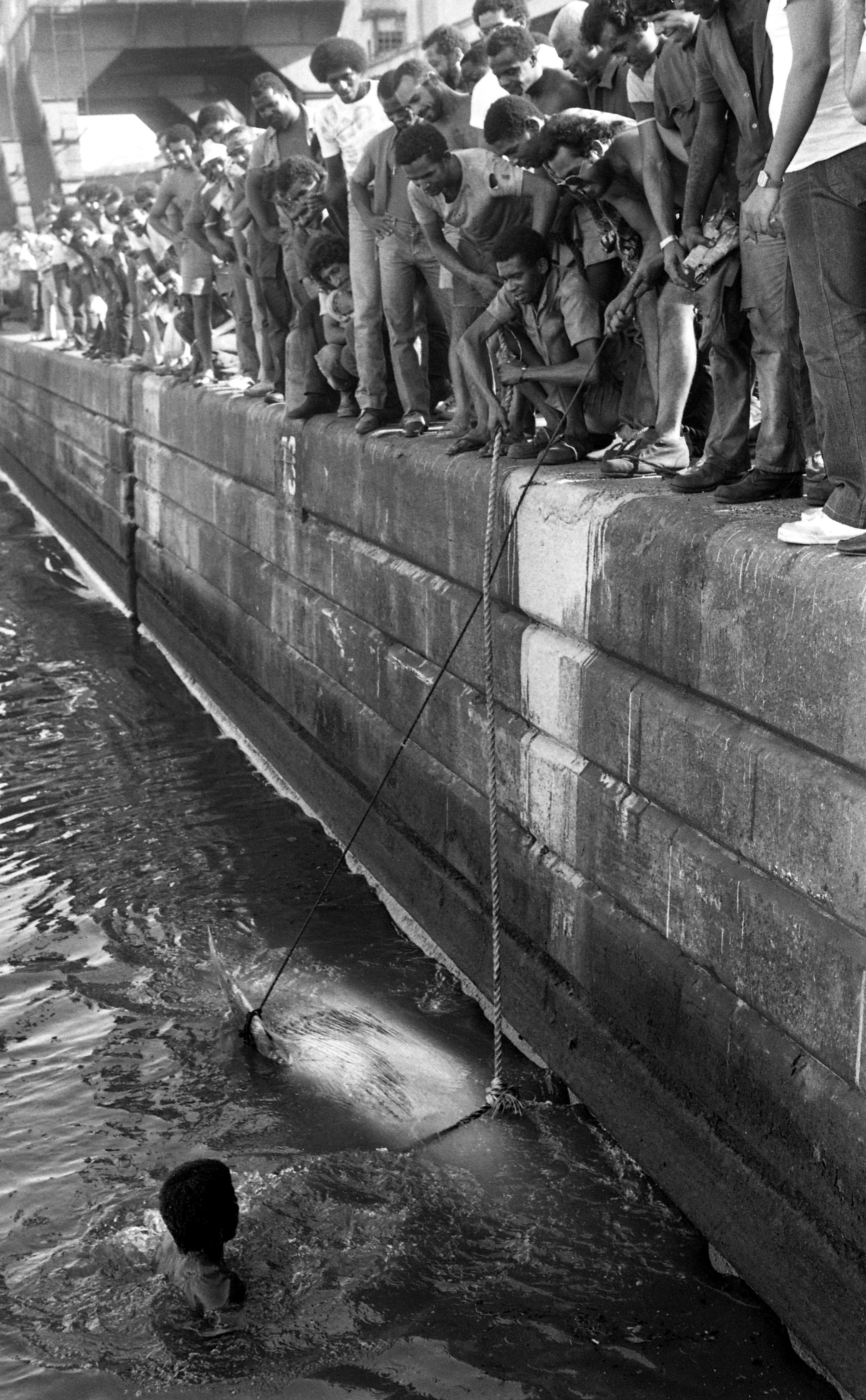 Jovem nada ao lado da carcaça da baleia para ajudar a iça-la
