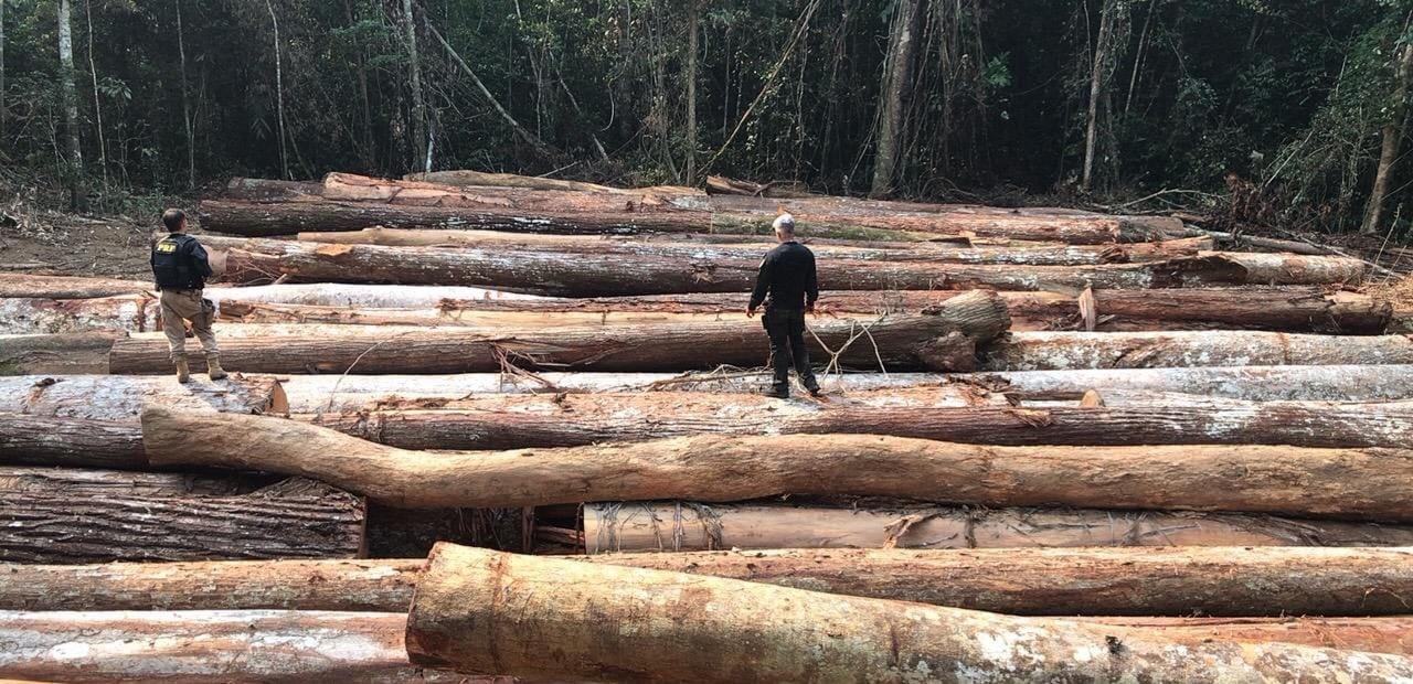 Exploração de madeira chegou a quase 70 mil hectares em um ano em Rondônia; mais de 5 mil foram em áreas de preservação