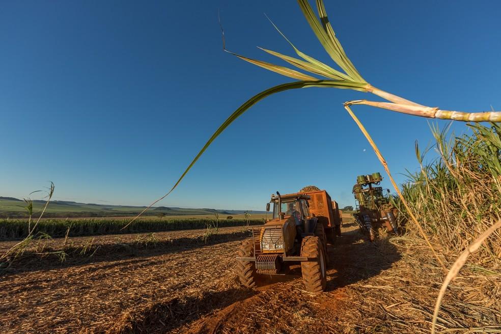 Processo de colheita da cana-de-açúcar.   — Foto: Copersucar