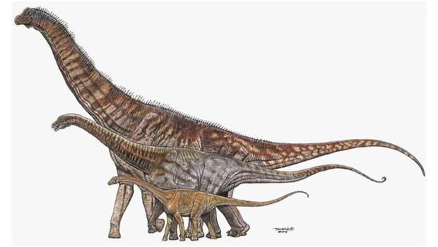 Titanossauros brasileiros Austroposeidon, Maxakalisaurus e Gondwantitan, cujo 'retrato familiar' era montado por bióloga com o acervo do Museu Nacional (Foto: MAURÍLIO OLIVEIRA via BBC)