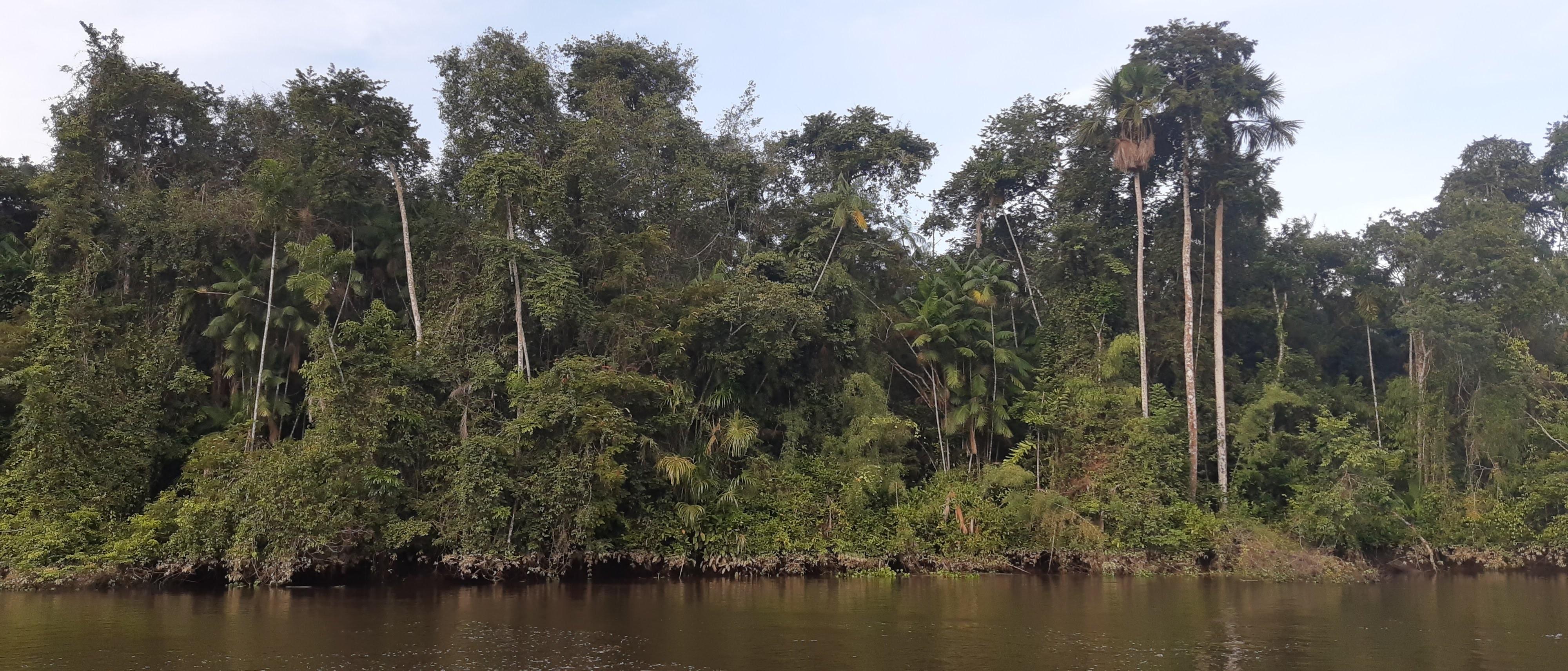 Com Amazônia emitindo mais CO2 do que absorvendo, mundo pode perder o seu 'ar condicionado' thumbnail