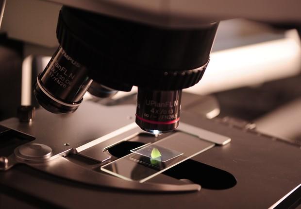 lab ; laboratório ; inovação ; ciência ; microscópio ; universidade (Foto: Pexels)
