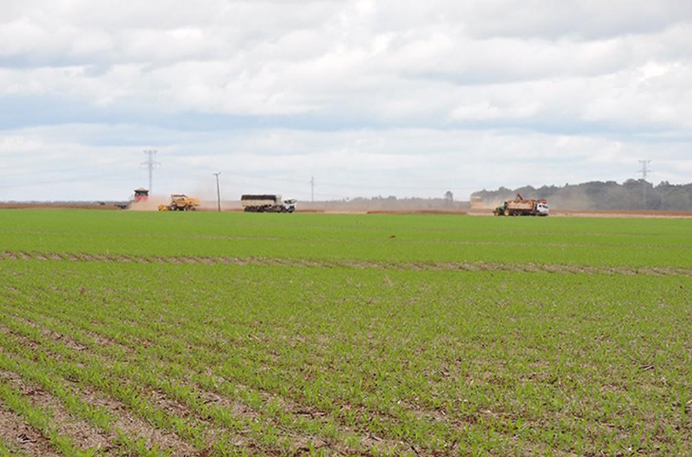 Produtores são responsáveis por 41,2% de área preservada em Mato Grosso — Foto: Embrapa/Divulgação