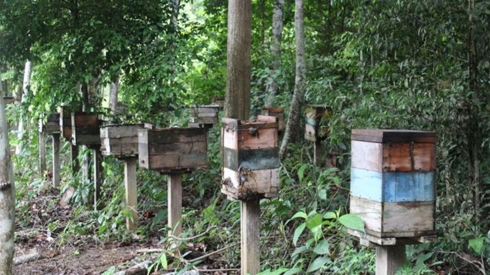 Produção de abelhas sem ferrão despencou na região de Belterra e se tornou economicamente insustentável — Foto: Gabriel Siqueira/BBC
