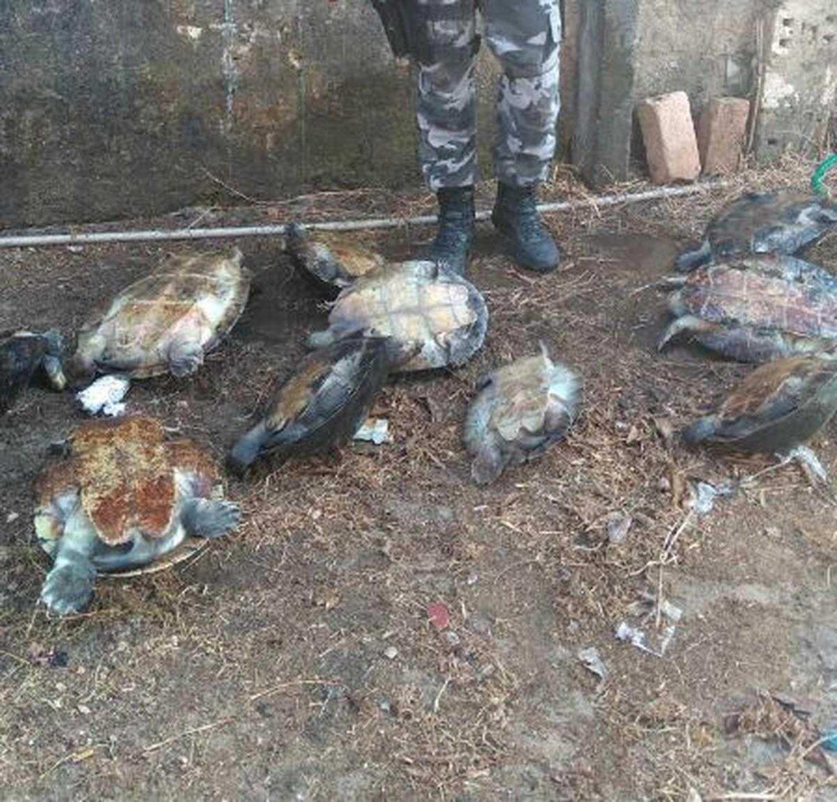 Polícia apreende 23 quelônios no interior de RR; suspeitos de crime ambiental são detidos
