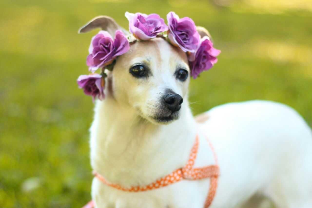 Outubro Rosa: pets também devem passar por exames para prevenir câncer de mama, dizem veterinários - Notícias - Plantão Diário
