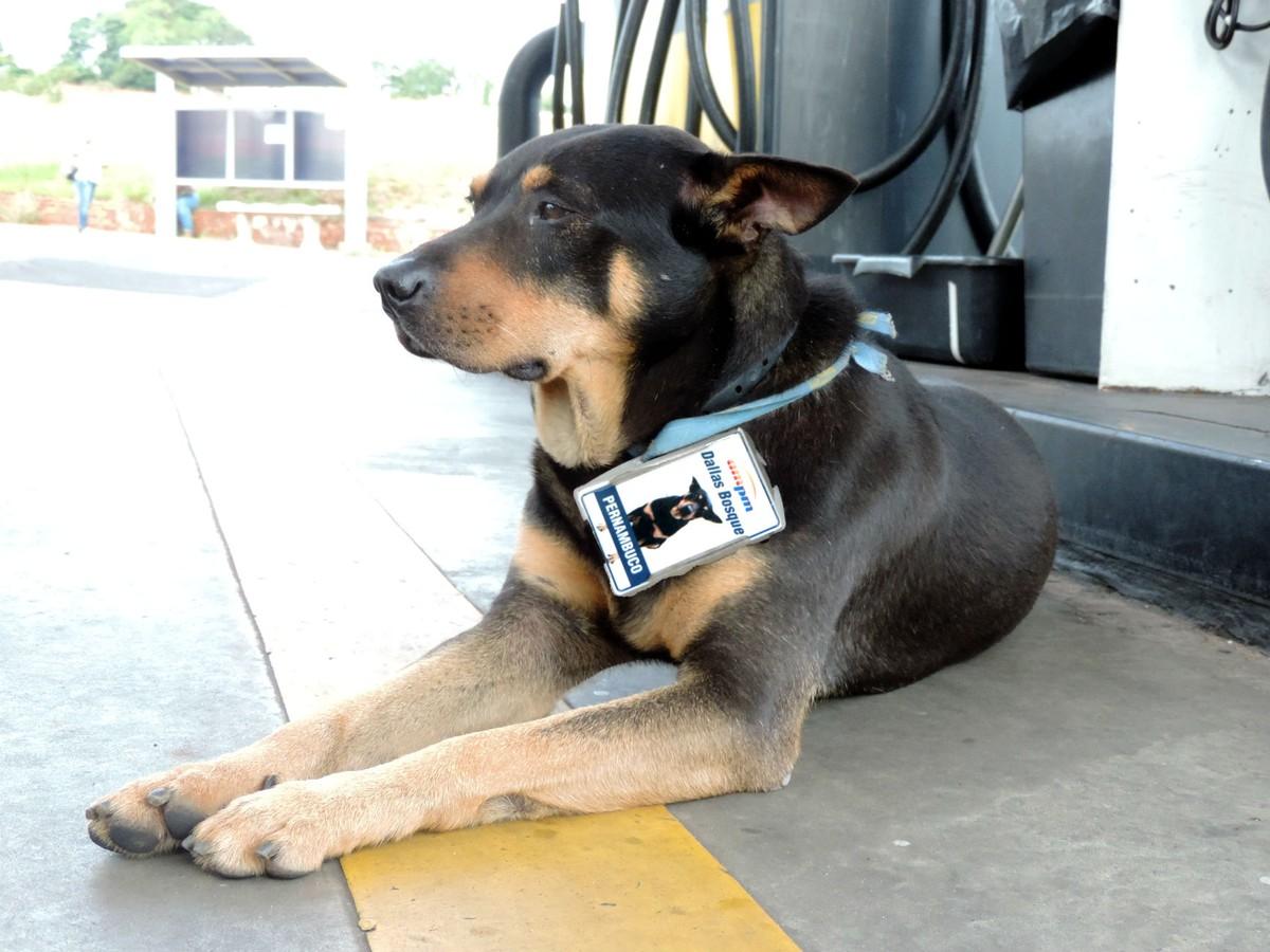 De andarilho a 'gerente de posto', cão ganha crachá e vira sucesso entre clientes