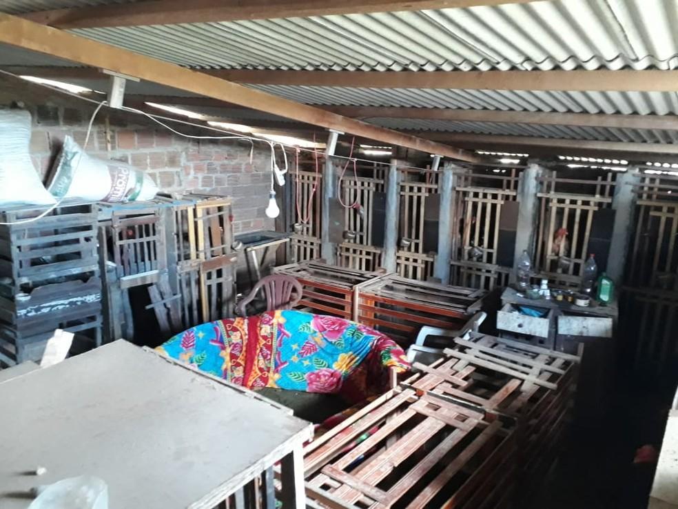 Arena para realização de rinhas foi encontrada em um sítio, na zona rural de Saloá — Foto: Polícia Civil/Divulgação