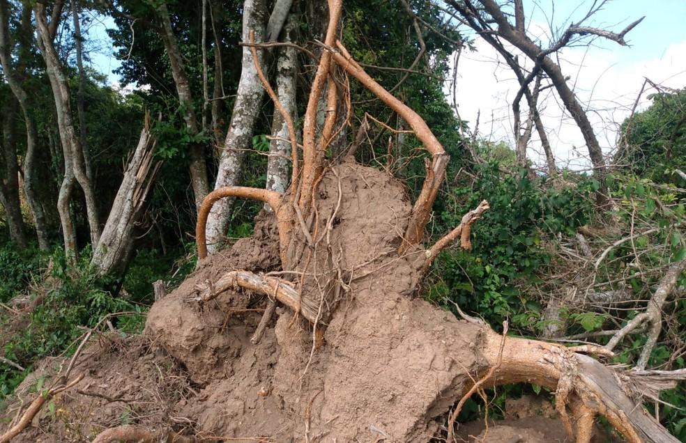 Homem é multado em R$ 160 mil após cortar e danificar com fogo mais de 100 árvores nativas em Conchas — Foto: Polícia Militar Ambiental/Divulgação
