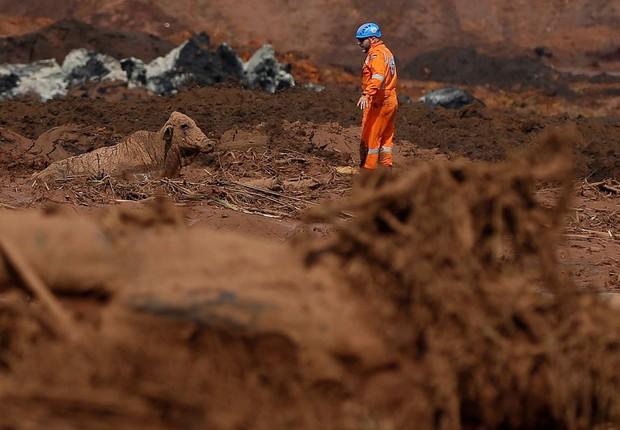 Animal preso na lama de Brumadinho, após rompimento de barragem da Vale (Foto: Reprodução/Agência Brasil)