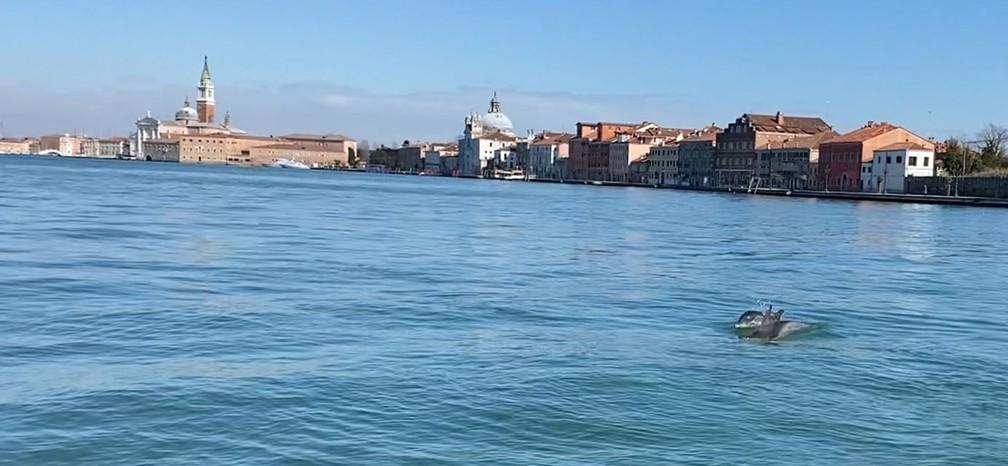 Golfinhos são avistados em canal de Veneza em foto de 22 de março de 2021 — Foto: Reprodução/CERT
