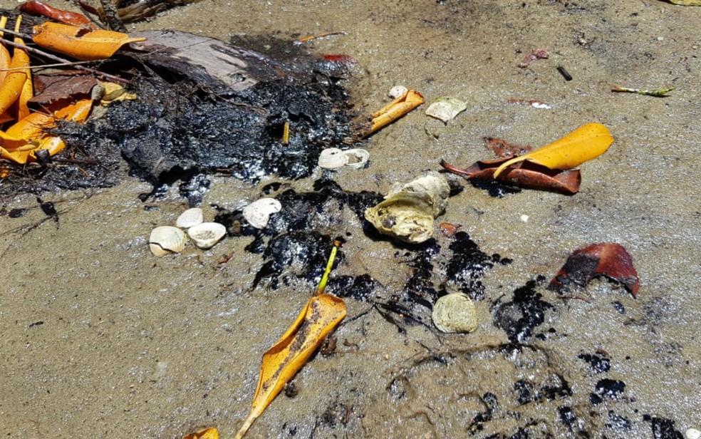 Foz do Rio Itapicuru, na cidade de Conde - BA, também foi atingida por manchas de óleo — Foto: Mauro Anchieta/TV Bahia