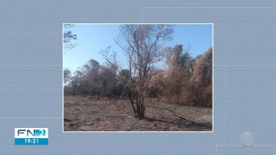 Danos ambientais em áreas rurais com vegetação nativa resultam em multas de quase R$ 500 mil