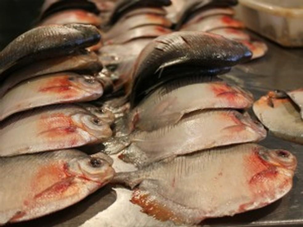 Peixe da espécie pacu — Foto: Girlene Medeiros / G1 AM