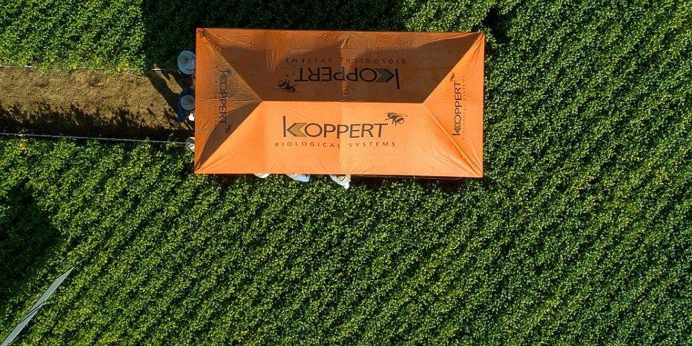 koppert do brasil campo (Foto: Divulgação/ Koppert do Brasil )