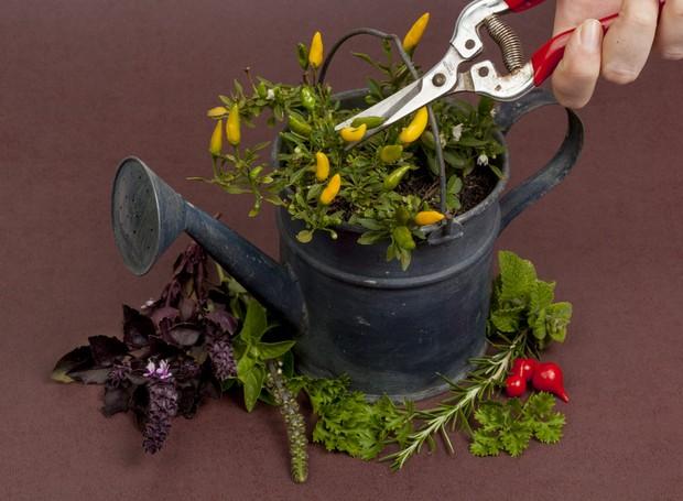 A identificação de ervas e dicas para utilizá-las da melhor forma na gastronomia estão entre as atividades da aula oferecida pelo Viveiro Sabor de Fazenda (Foto: divulgação)