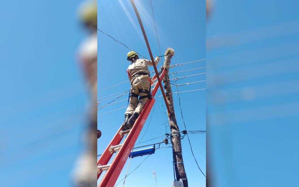 -  Bombeiros resgatam porco-espinho no topo de poste, em Uruataí  Foto: Corpo de Bombeiros/Divulgação