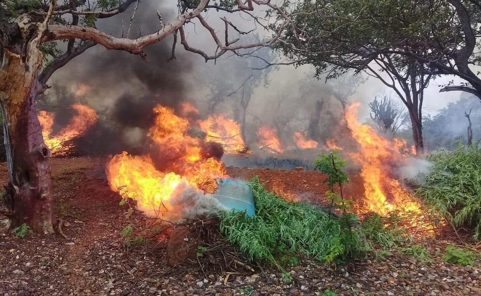 Parte da maconha encontrada no norte da Bahia foi incinerada.  — Foto: Divulgação/Polícia Federal