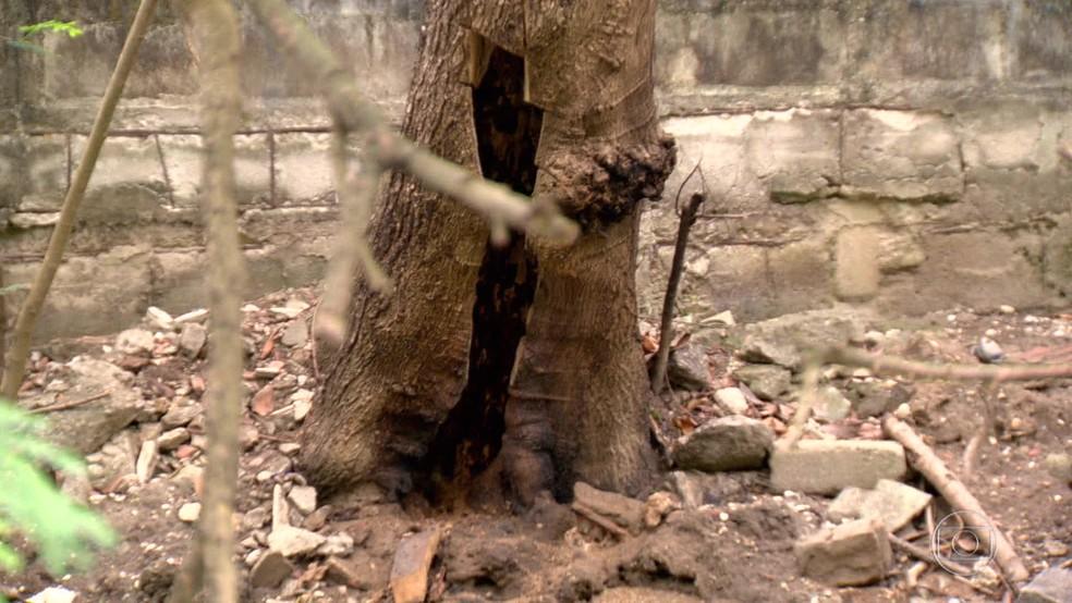 Local onde a colmeia estava escondida perto do Canal de Marapendi, na Barra da Tijuca. (Foto: Reprodução/ TV Globo)