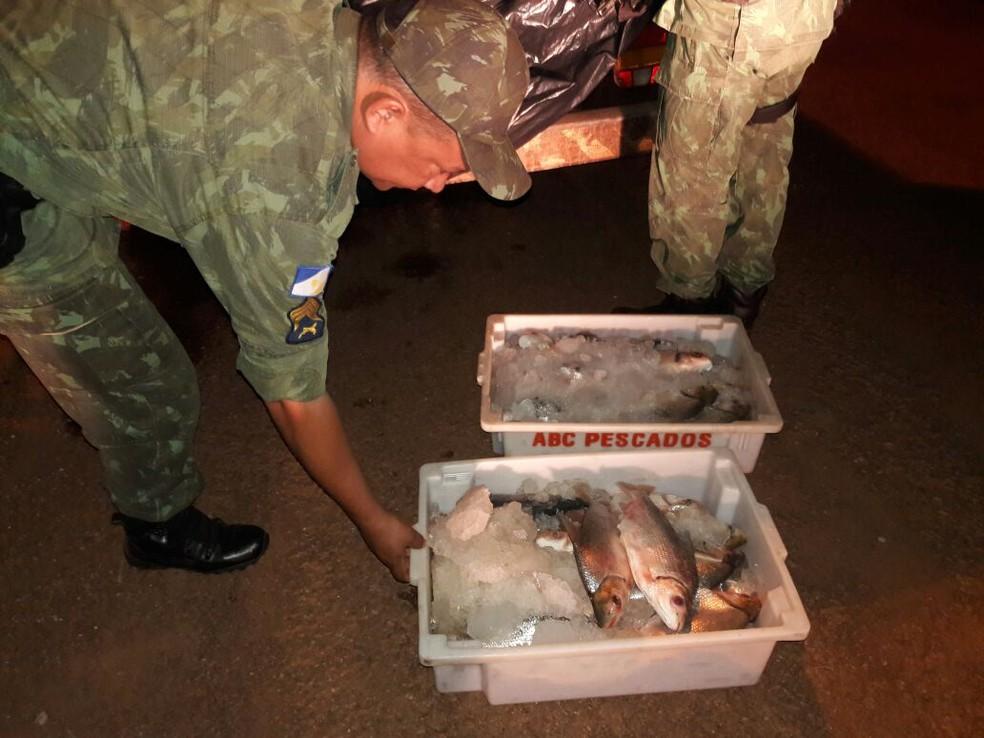 Peixes foram apreendidos em Caseara (Foto: Divulgação/PM Ambiental)