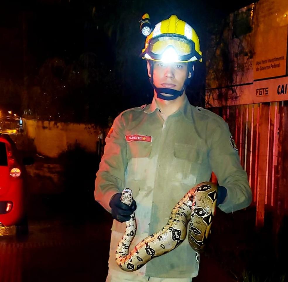 Maioria das cobras capturadas são jiboias, segundo bombeiros — Foto: Divulgação/Corpo de Bombeiros