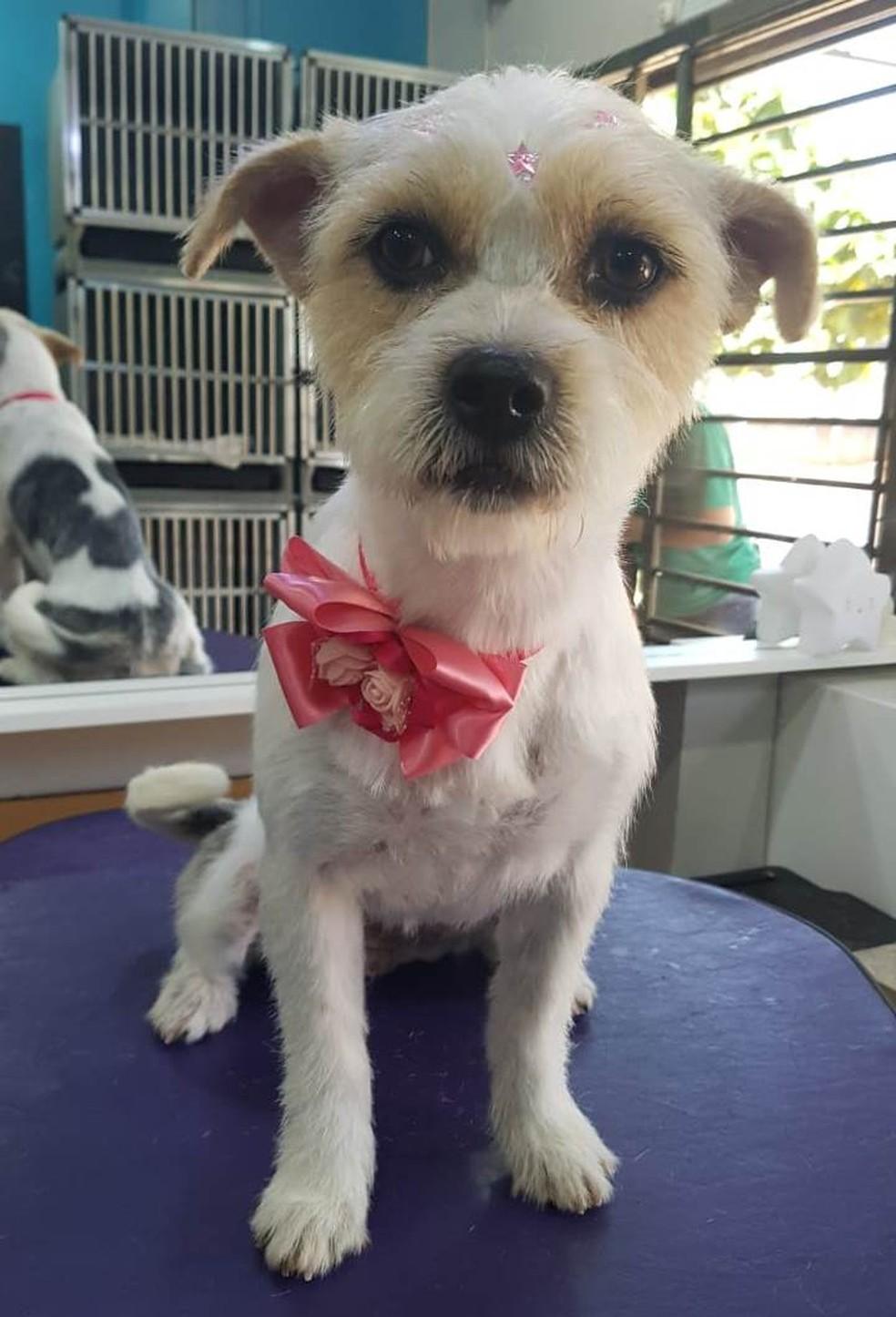 Cachorrinha foi encontrada e está em lar provisório, em Cascavel — Foto: Arquivo pessoal