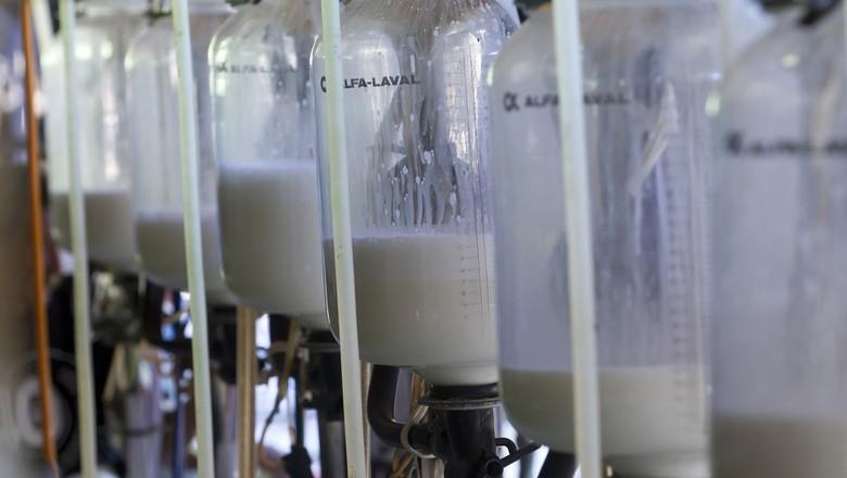 leite (Foto: Rogério Albuquerque)