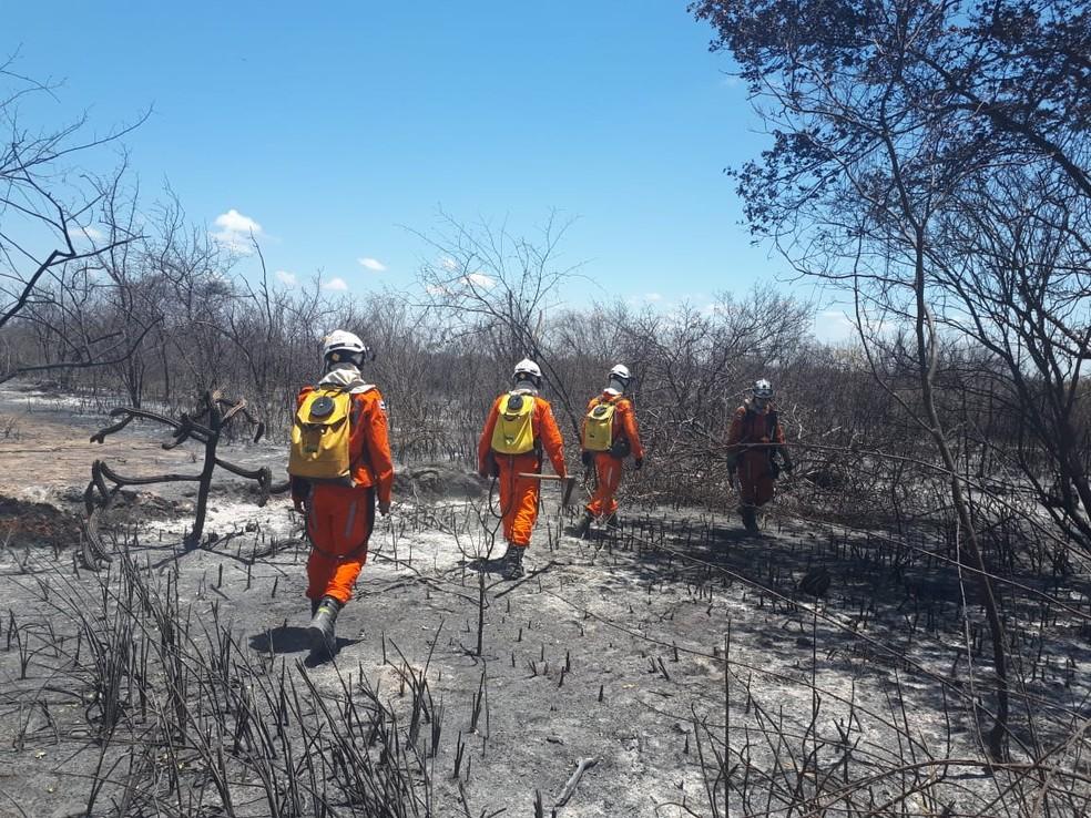 Incêndio causa destruição em área de vegetação de Abaré, no norte da Bahia — Foto: Divulgação/Prefeitura de Abaré