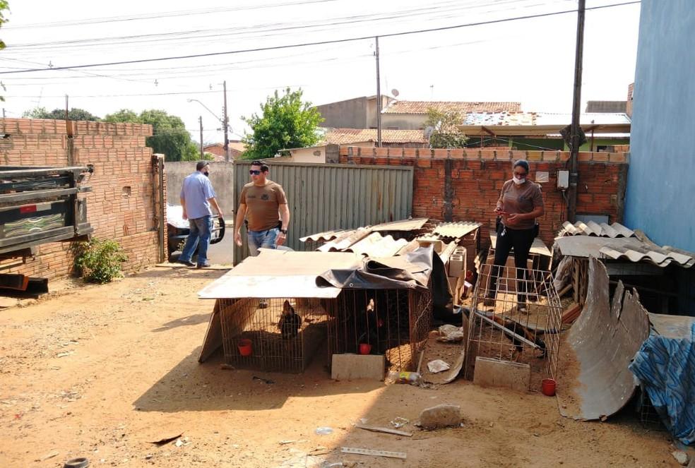 Homem foi detido suspeito de promover rinha de galos em Avaré — Foto: Polícia Civil/Divulgação