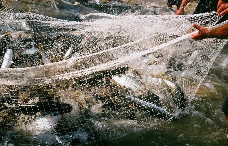 Governo de SC autoriza retorno das atividades de autoescolas, pesca de arrasto e leilões de bovinos