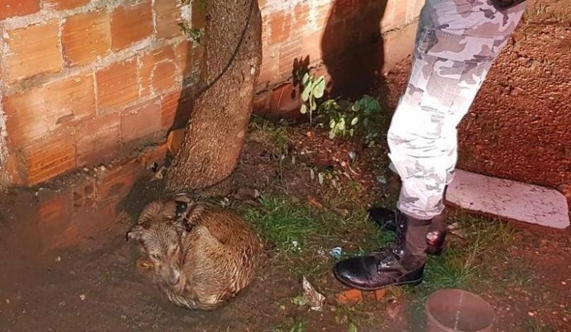Polícia resgata cadela amarrada em árvore no Maranhão