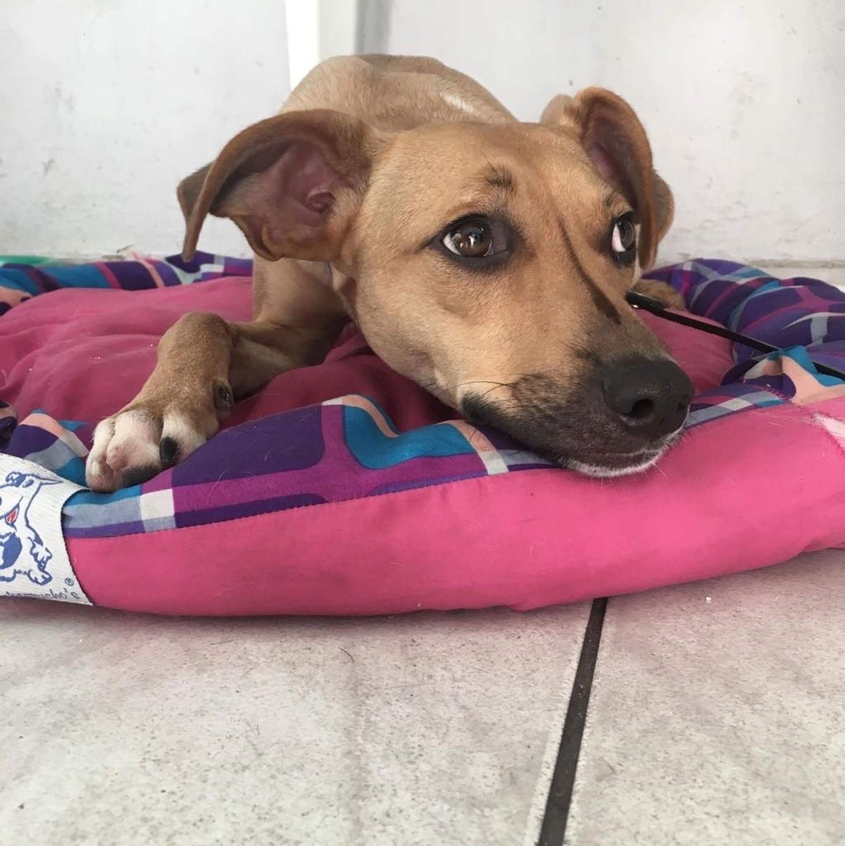 Suzano recebe feira de adoção de cães e gatos neste fim de semana
