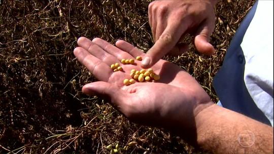 Ameaça de retirada do glifosato do mercado preocupa os produtores de soja