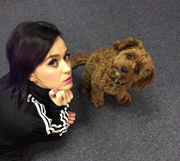 A cantora Katy Perry com seu cachorro, Nugget (Foto: Instagram)