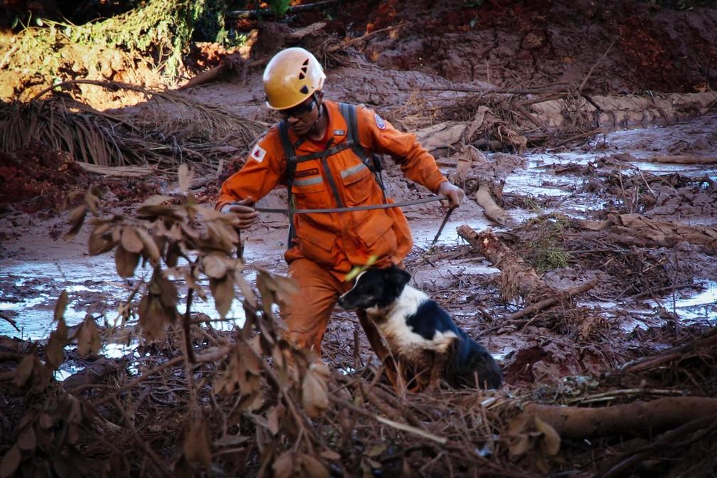 Bombeiro tem auxílio de cachorro durante busca por vítimas e desaparecidos em Brumadinho — Foto: Fernando Moreno/Futura Press/Estadão Conteúdo