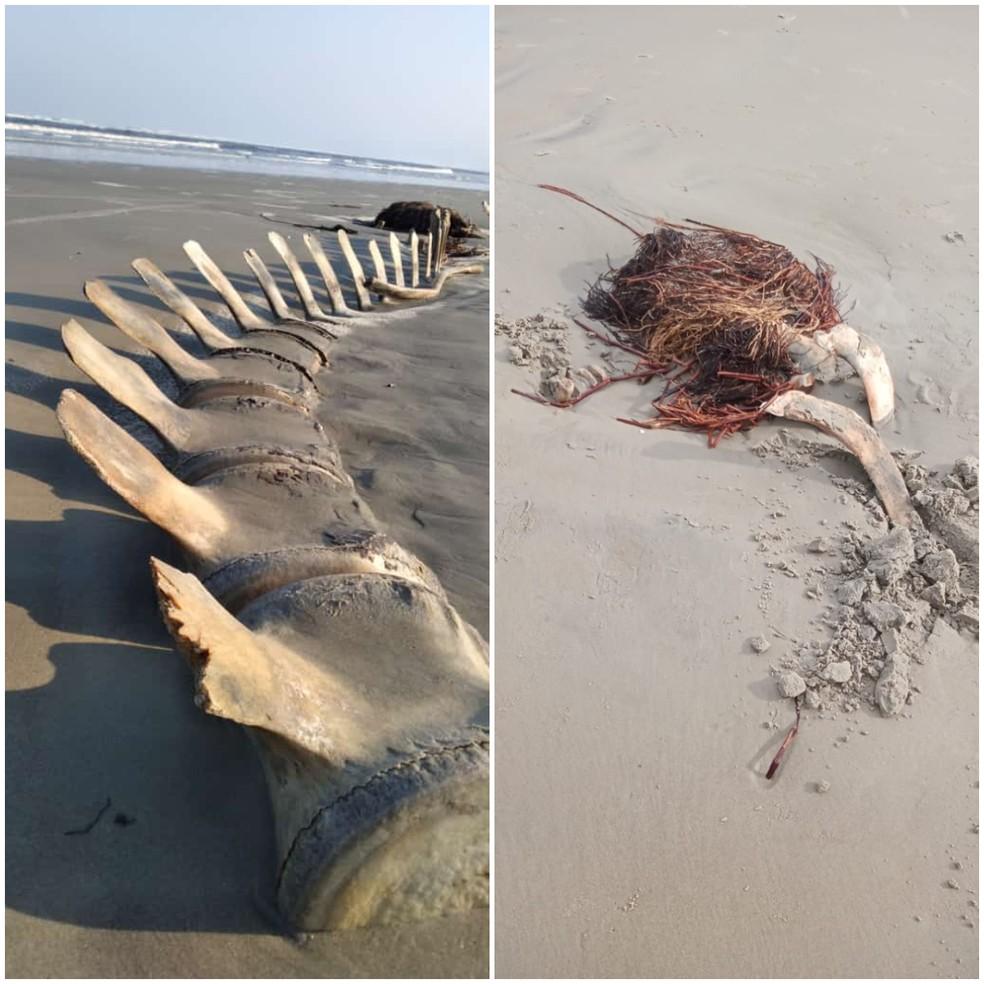 Apenas um osso restou no local onde ossada de 4 metros foi encontrada — Foto: G1 Santos